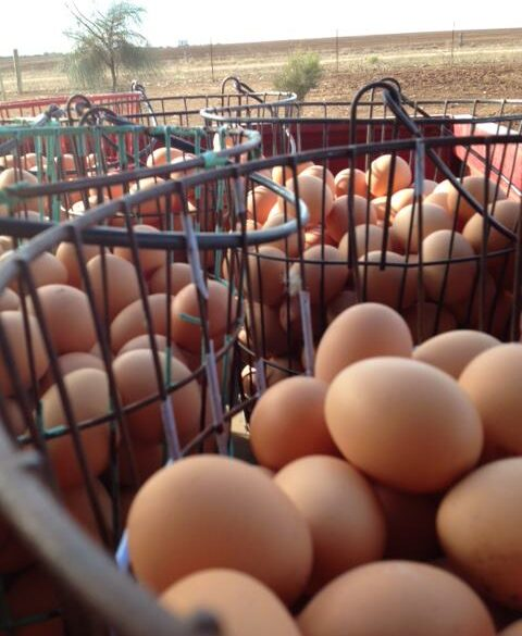 Wire baskets of eggs.