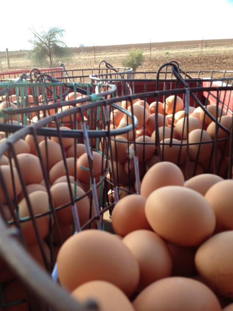 Gumview Free Range Eggs